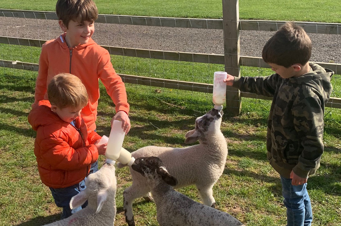 Kid Friendly Camping - Feeding Lambs
